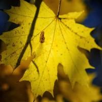 12_jesien