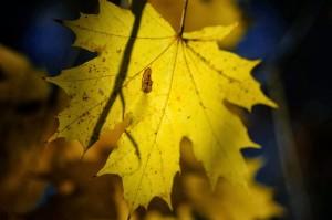 12 jesien